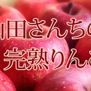 山田さんちの完熟りんご、ご予約受付中!