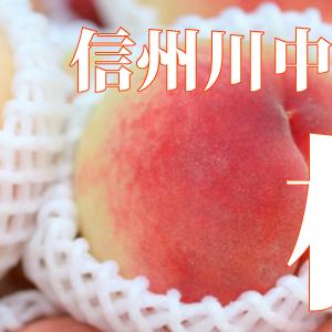 信州川中島平産、最高級の桃をお届け!